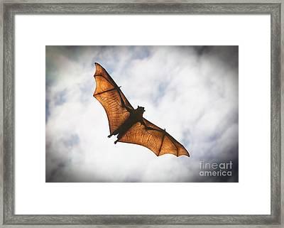 Spooky Bat Framed Print