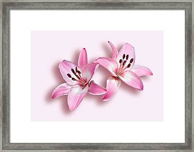 Spray Of Pink Lilies Framed Print by Jane McIlroy