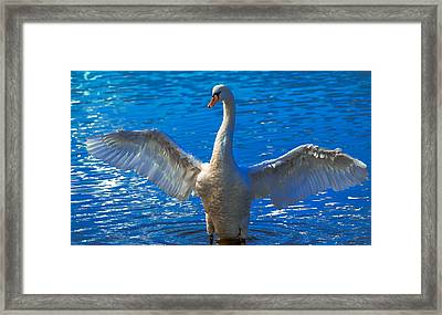 Spread Your Wings Framed Print by Brian Stevens