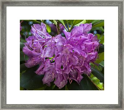 Spring Flower Framed Print by Robert Ullmann