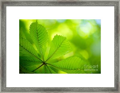 Spring Green Framed Print