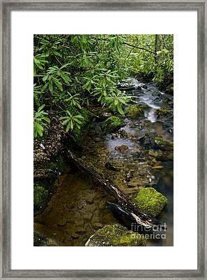 Spring Monongahela National Forest Framed Print by Thomas R Fletcher