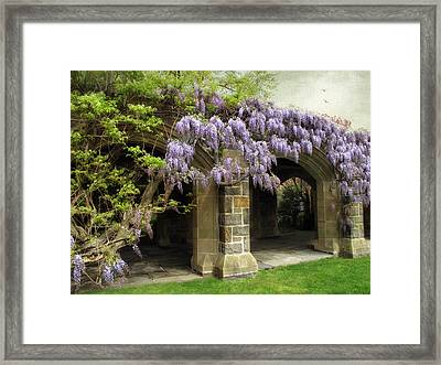Spring Wisteria Framed Print by Jessica Jenney