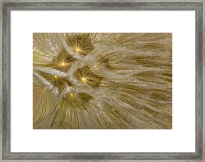 Spun Gold Framed Print
