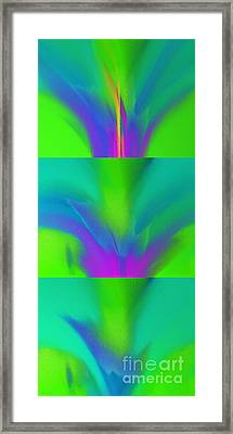 3 Stages Of A Bloom Abstract Framed Print