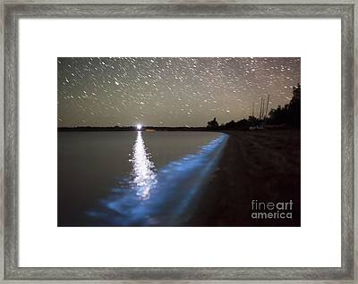 Star Trails And Bioluminescence Framed Print by Philip Hart