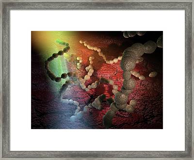 Streptococcus Pneumoniae Artwork Framed Print by Hipersynteza