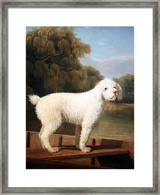 Stubbs' White Poodle In A Punt Framed Print by Cora Wandel