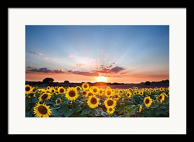 Essential Photographs Framed Prints