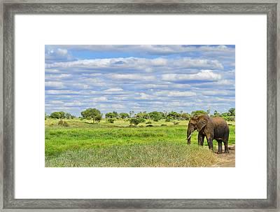 Tanzania, Tarangire National Park Framed Print by Bill Bachmann