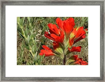 Texas Paintbrush Framed Print by Ellen Henneke