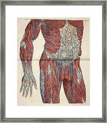 The Circulatory System Framed Print by British Library