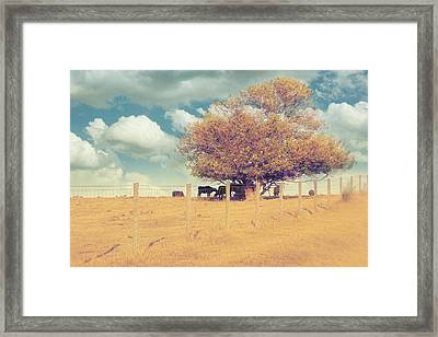 The Cow Tree Framed Print by Amy Tyler