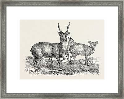 The Earl Of Derbys Menagerie, At Knowsley Framed Print by English School