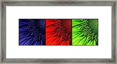 3 Tile Sunflower Colors Framed Print
