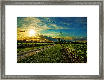 Tobacco Road Framed Print