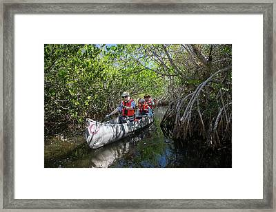 Tourists Canoeing In Mangrove Swamp Framed Print by Jim West