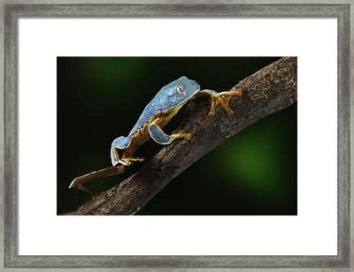 Tree Frog Climbing Framed Print