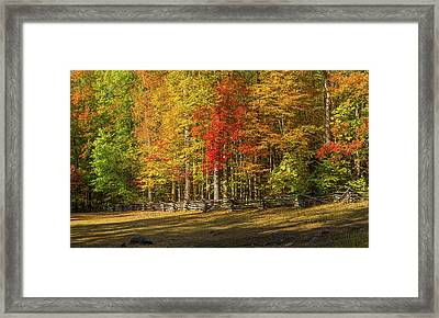 Trees In A Forest, Roaring Fork Motor Framed Print by Panoramic Images
