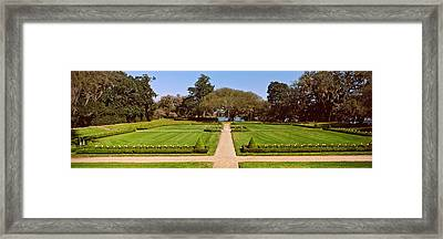 Trees In A Garden, Middleton Place Framed Print