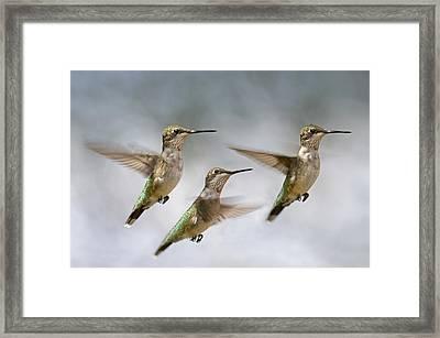 Trio Framed Print by Betsy Knapp