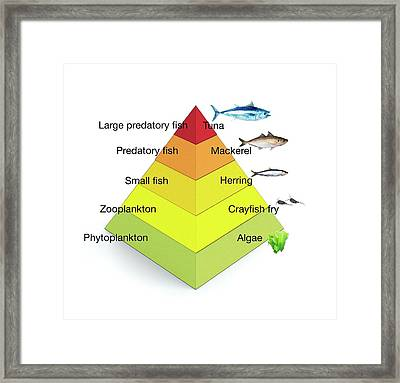 Trophic Levels In The Sea Framed Print by Mikkel Juul Jensen
