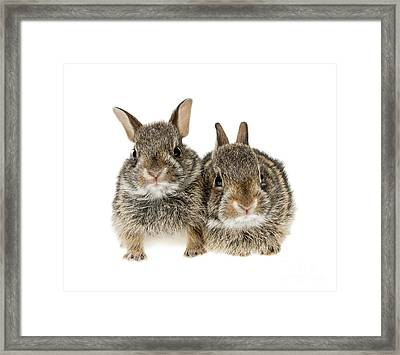 Two Baby Bunny Rabbits Framed Print