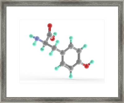 Tyrosine Molecule Framed Print by Alfred Pasieka/science Photo Library