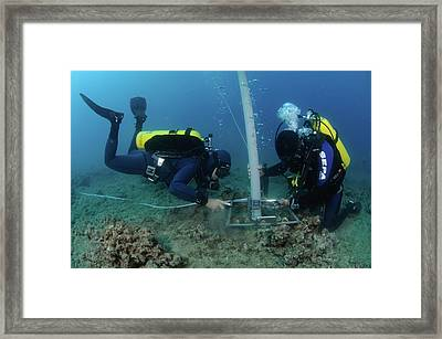 Underwater Survey Framed Print by Photostock-israel