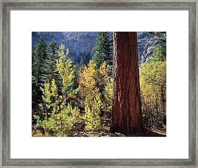 Usa, California, Sierra Nevada Framed Print