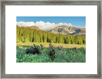 Usa, Colorado, Arapaho National Forest Framed Print