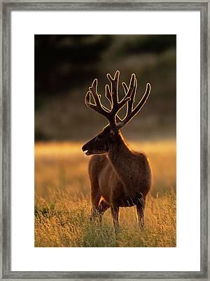 Usa, Colorado, Jefferson County Framed Print by Jaynes Gallery