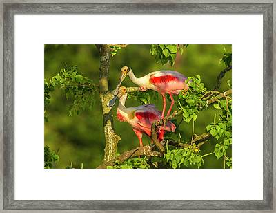 Usa, Louisiana, Jefferson Island Framed Print