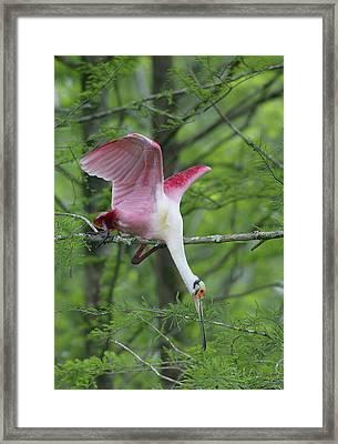Usa, Louisiana, Lake Martin Framed Print
