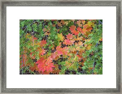 Usa, Oregon, Rogue River National Forest Framed Print by Jaynes Gallery
