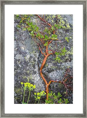 Usa, Washington State, Wenatchee Framed Print by Jaynes Gallery