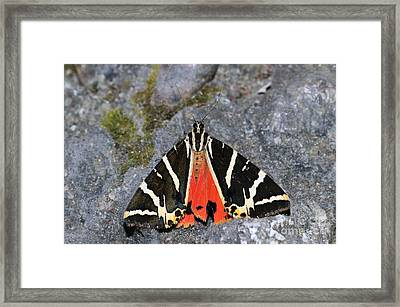 Valley Of Butterflies In Rhodes Island Framed Print by George Atsametakis