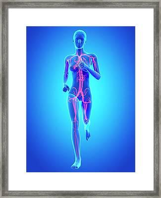 Vascular System Of A Runner Framed Print