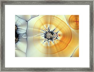 Vitamin C Birefringence Framed Print by Karl Gaff
