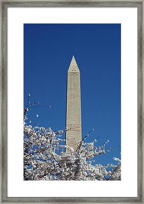 Washington, Dc, Cherry Blossom Festival Framed Print by Lee Foster