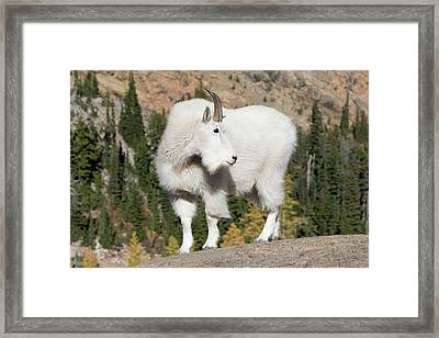 Washington State, Alpine Lakes Framed Print