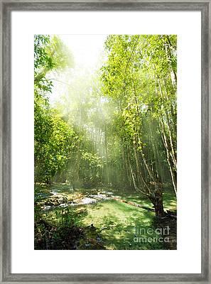 Waterfall In Rainforest Framed Print