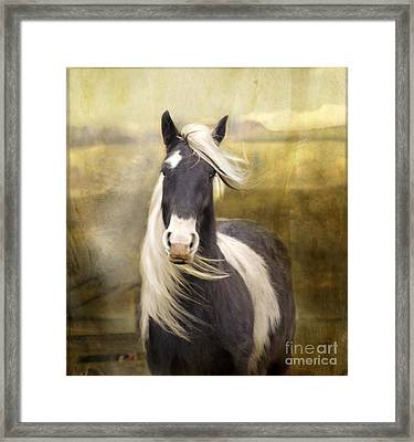 Welsh Cob Framed Print by Angel  Tarantella