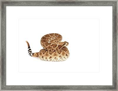 Western Diamondback Rattlesnake Framed Print by John Bell
