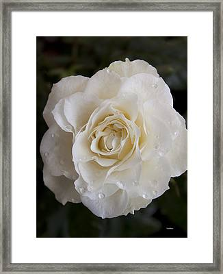 White Rose Framed Print by Ivete Basso Photography