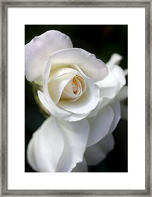 White Rose Petals Framed Print by Jennie Marie Schell