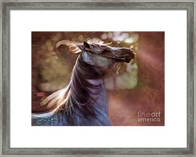 Wild At Heart Framed Print
