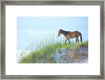 Wild Horse On The Outer Banks Framed Print by Diane Diederich