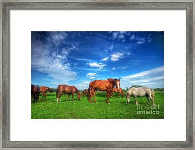 Wild Horses On The Field Framed Print by Michal Bednarek
