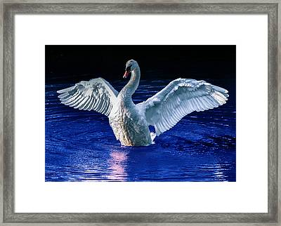 Wings Framed Print by Brian Stevens